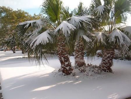 Snow on a palm tree isn't always appropriate